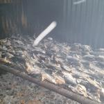 Fish processing in the island