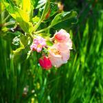 Bloom Closeup