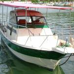 New boat for whale watching,  swim with whales,  underwater photography