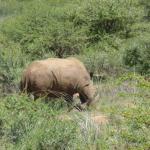 Black Rhino...I think