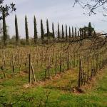 Sulla Via Francigena che dall'agriturismo porta a Monteriggioni
