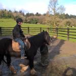 Muckross Riding Stables B&B Foto