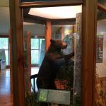Palmetto-Peartree Preserve Tyrrell County Visitor Center