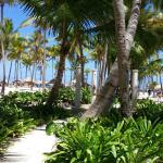 Landscape - Catalonia Punta Cana Golf & Casino Resort Photo