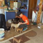 Deanne has rescued many many dogs