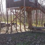 View of the White Oak treehouse grounds from close to the fire pit.