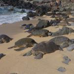 Turtles basking