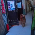 The welcoming dog