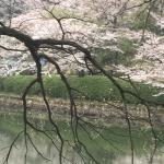 Mitsuike Park Foto