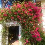The lush landscaping includes this entry arch, abloom in bougainvillea