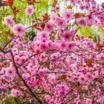 Heihu Spring Foto