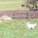 Onze hond had het naar zijn zin in de omheinde tuin en met de dieren op het domein