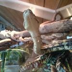 Photo of Reptile House De Aarde