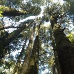 Yarndley's Bush