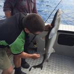 Emu Bay Fishing Charters - Private Charters Foto
