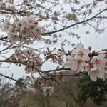 Sakura no yama Park Photo