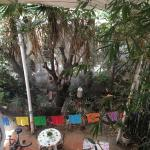 Photo de Hostal B&B Dos Fridas y Diego