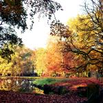 Beautiful autumn trees in the surroundings