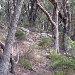 het pad naar de lookout