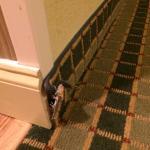 Photo de Homewood Suites by Hilton San Antonio Northwest