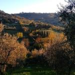 View from olive grove