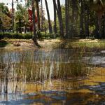 RLB, Tar Pits & Page Museum 23