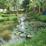 The pond near the enttrance