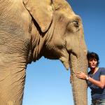 A rescued elephant giving and getting love