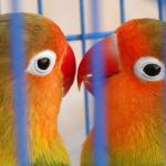 i pappagallini all'ingresso