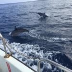 Captain Dan McSweeney's Whale Watching Adventures Foto