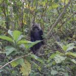Sykes monkey in Arusha National Park while on safari with Paul Sweet, Shaw Safaris.