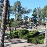 Pines Park Foto