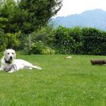 Photo of B&B Daisy Thun Switzerland