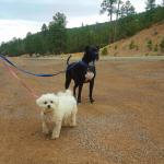 Levi Pitboxer and GiGi on the Scene in the Cibola National Forest