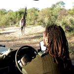 Escorted safaris are recommended