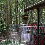 Treetop Adventure park!