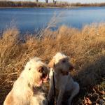 Foto de Gray's Lake Park