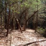 Little Creek Park