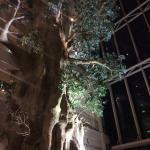 Photo de Yakushima Iwasaki Hotel