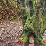 Woodland Faerie Trail