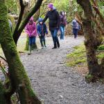 Lovely Woodland Walk, Faerie Trail Achill