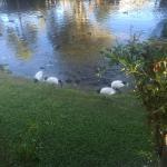 Sanctuary Lakes Fauna Retreat Foto