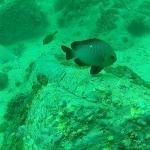 תמונה מ7 Seas Divers - Day Tours