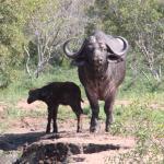 Photo de Mkhaya Endangered Species