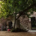 En bild som har med kulturinslag från 1100-talet och olivträdet.