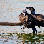 Luoma Lake Wetland
