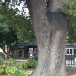 The Old Slave Tree Foto