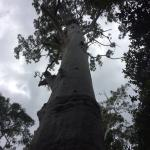 Rose Gums Wilderness Retreat Foto