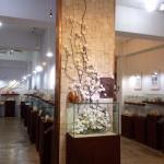 World Seashell Museum Foto