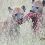 Фотография Mara Explorer Camp